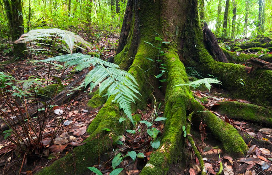 森の中の力強い木の根