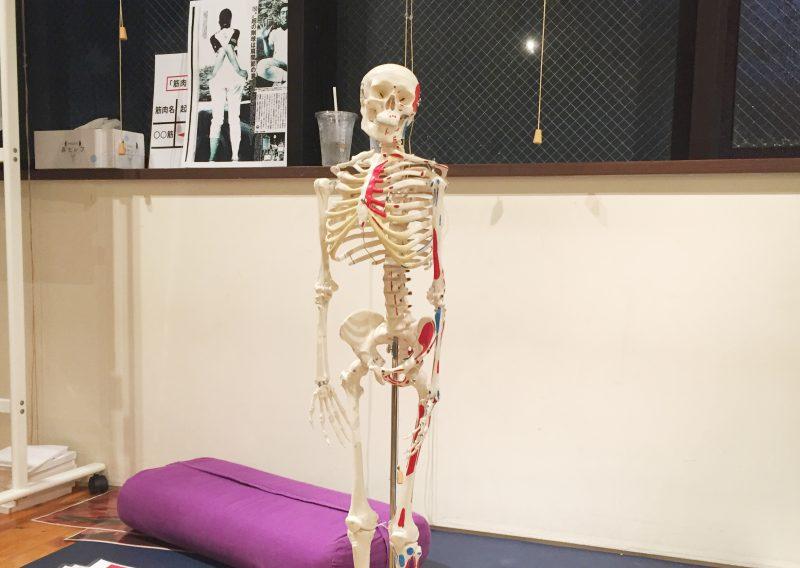 骨模型がこちらを見つめている