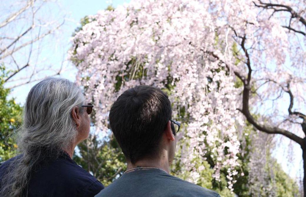 ジェイ・ブラウンとマーク・ウィットウェルが桜を見ている様子
