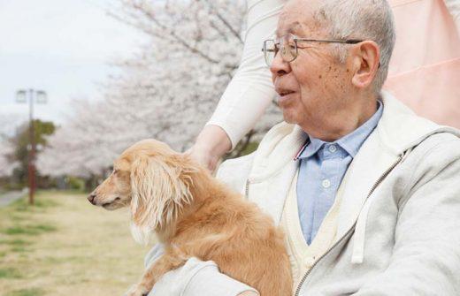 犬を抱く高齢者
