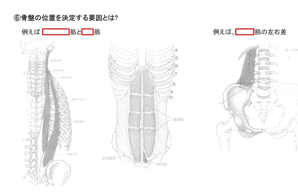 ヨガ解剖学講師内田かつのり先生の講座「骨盤セラピー」のテキストの一部