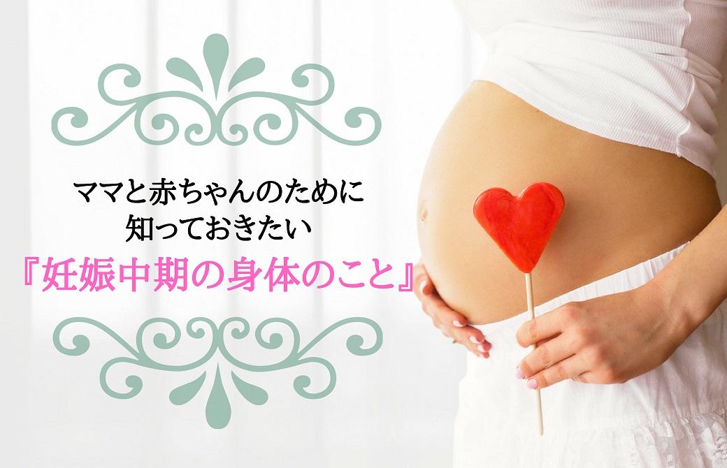 ママと赤ちゃんのために知っておきたい妊娠中期の身体のこと