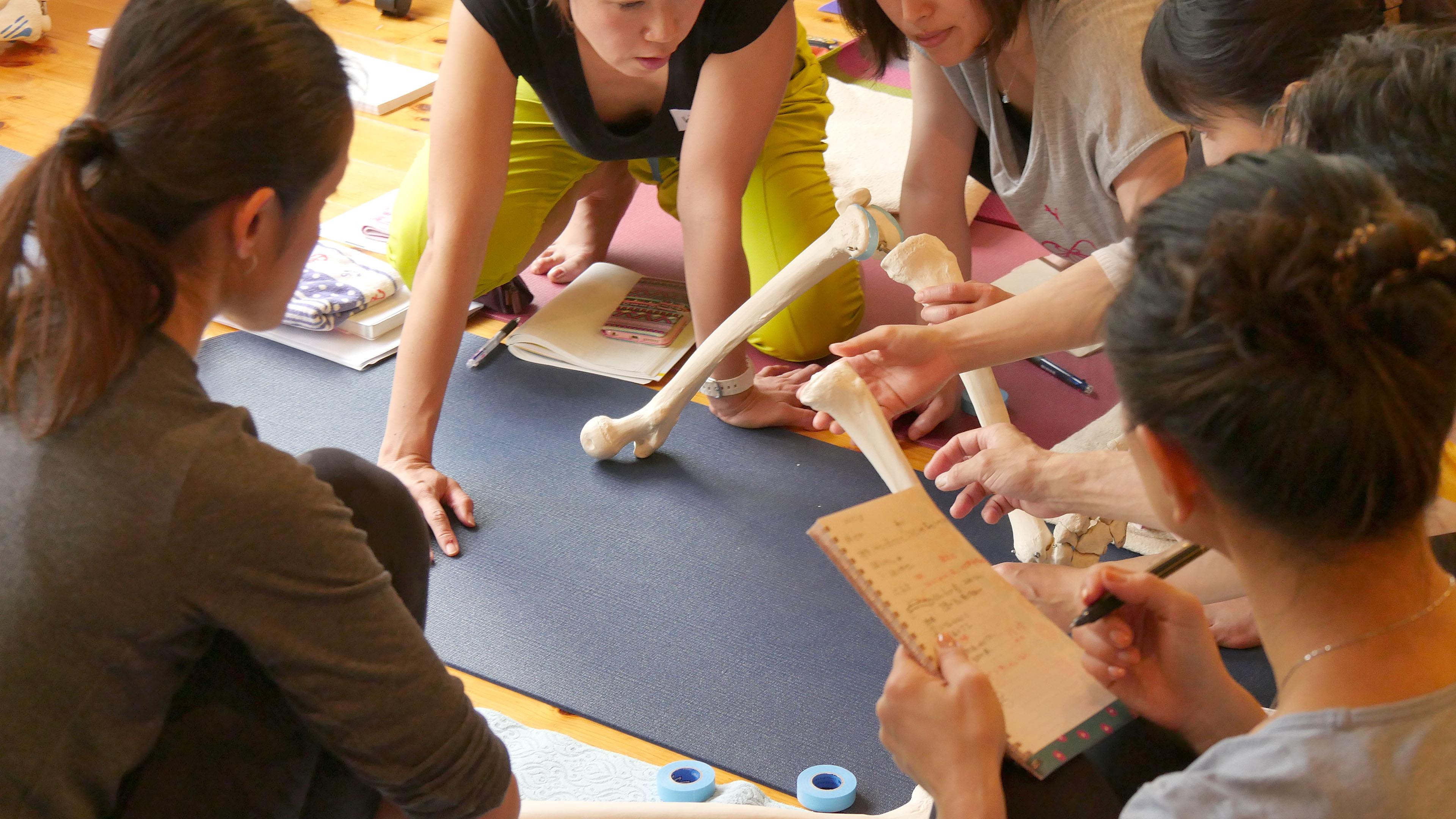 ヨガ解剖学講師内田かつのり先生による膝関節セラピーの様子。模型を使って膝構造を確認している