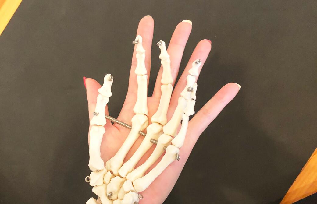 手と手の模型を重ね合わせている